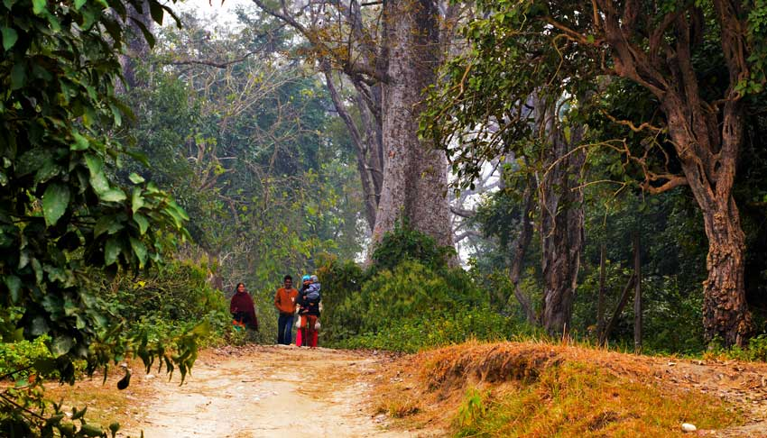 Beautiful Bardiya National Park